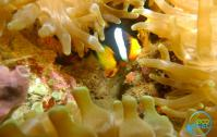 Fish life in home reef