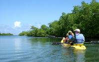 Kayaking on Mangrove creeke - eco diver kayak tour
