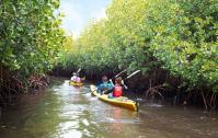 Kayaking on Mangrove creeke - eco diver kayak tours